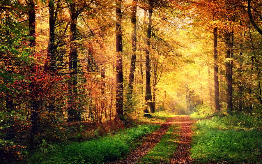 Υπέροχο τοπίο σε δάσος